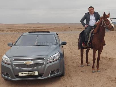 Chevrolet Malibu, 2 позиция 2013 года за 14 200 y.e. в Термез